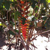 pianta_madagascar_intermed