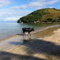 spiaggia2_madagascar_intermed